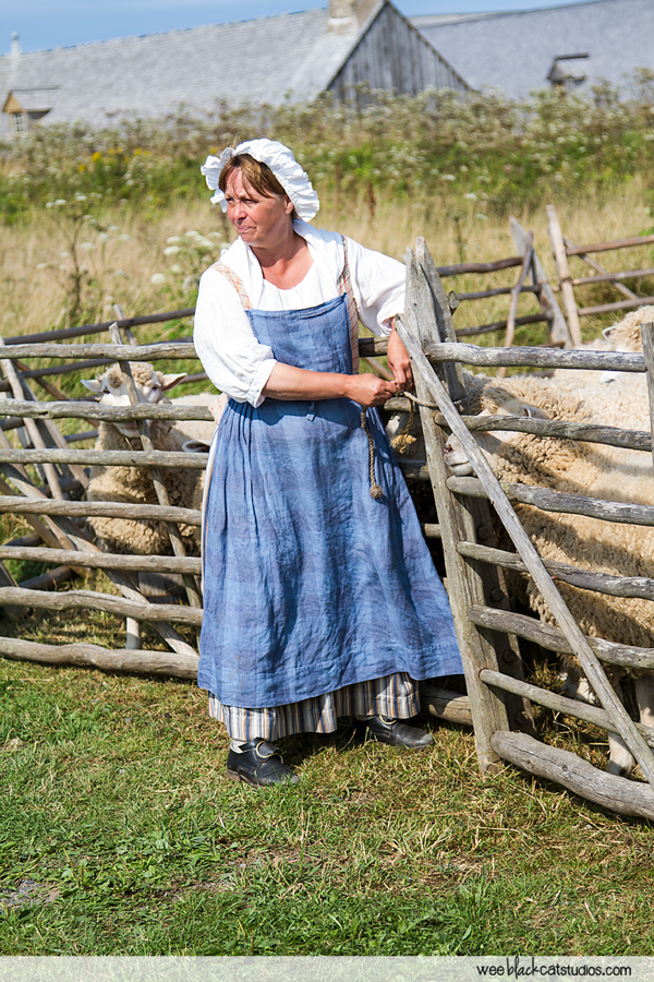 The Running of the Sheep, Fortress of Louisbourg, Cape Breton